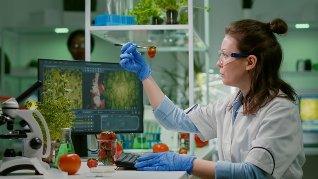 Mikrobiološka analiza hrane